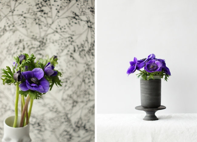 Lila Anemonen | Fotos: Sabine Wittig