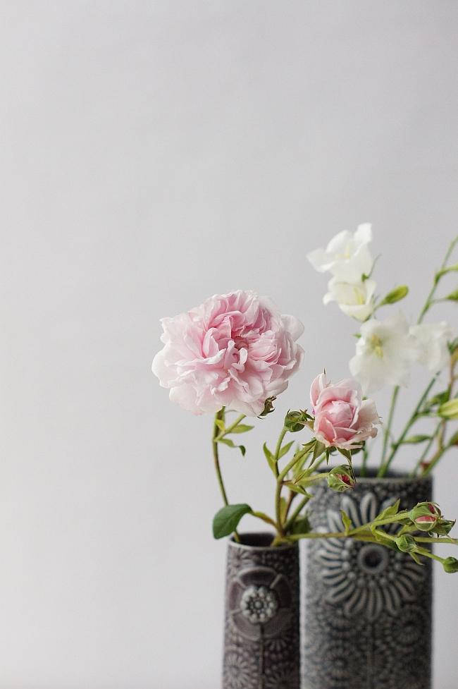 Rose aus dem Garten | Foto: Sabine Wittig