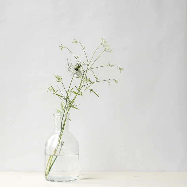 Nigella | Foto: Sabine Wittig