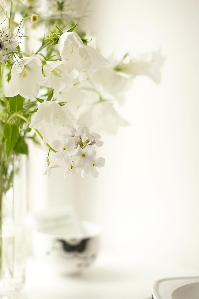 Ganz in weiß: Frühsommerblumen | Foto: Sabine Wittig