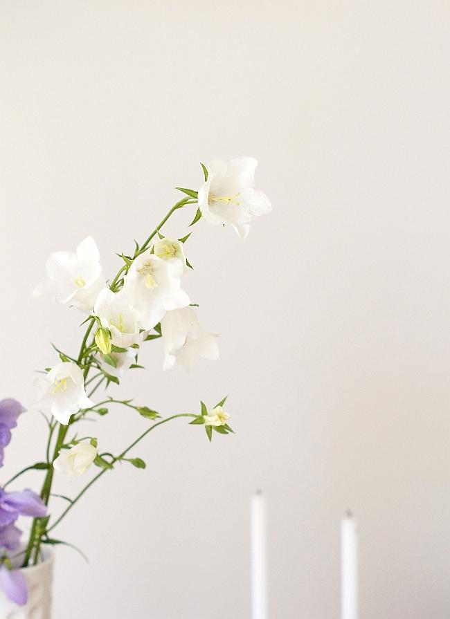 Glockenblume | Foto: Sabine Wittig