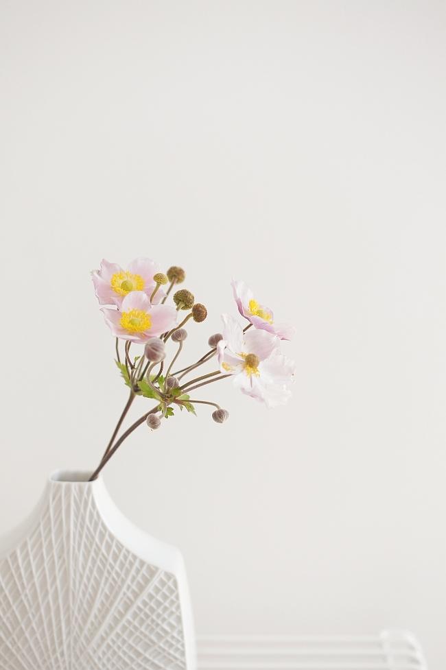 Herbstanemonen | Foto: Sabine Wittig