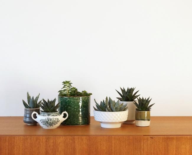 Zimmerpflanzenmix | Foto: Sabine Wittig