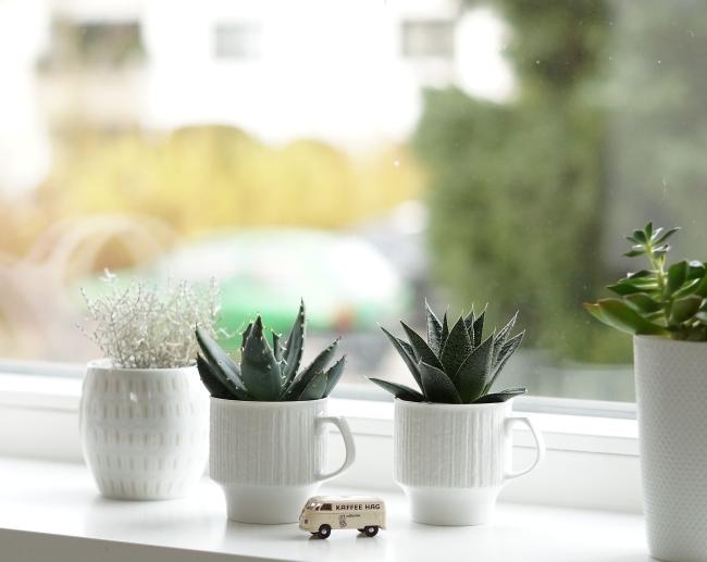 Mini Aloen in Vintage Porzellan | Foto: Sabine Wittig