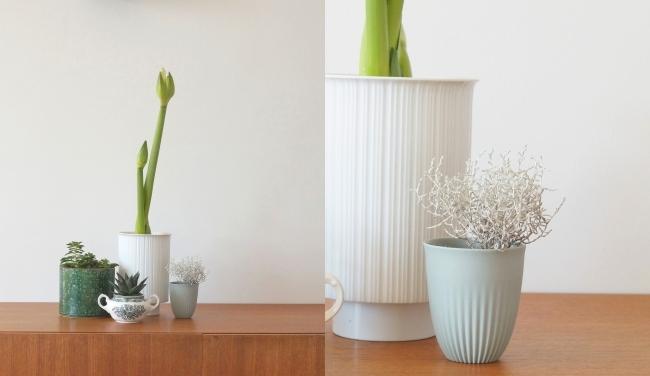 Pflanzen und Porzellan | Fotos: Sabine Wittig