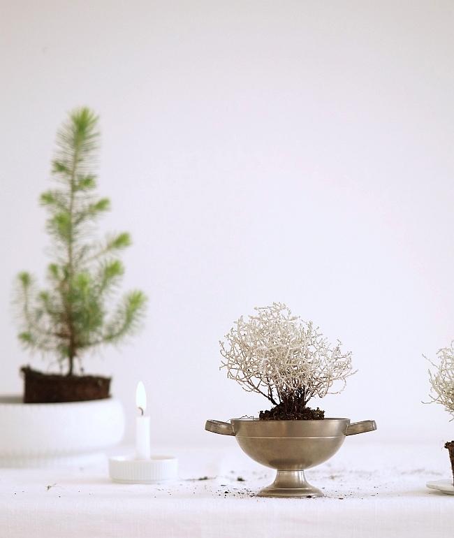Vintage plant pots | photo: Sabine Wittig