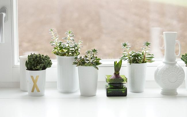 Grün mag Weiß | Foto: Sabine Wittig