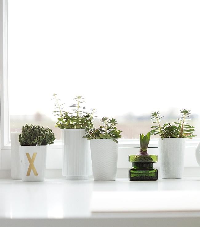 Weiß trifft Grün | Foto: Sabine Wittig