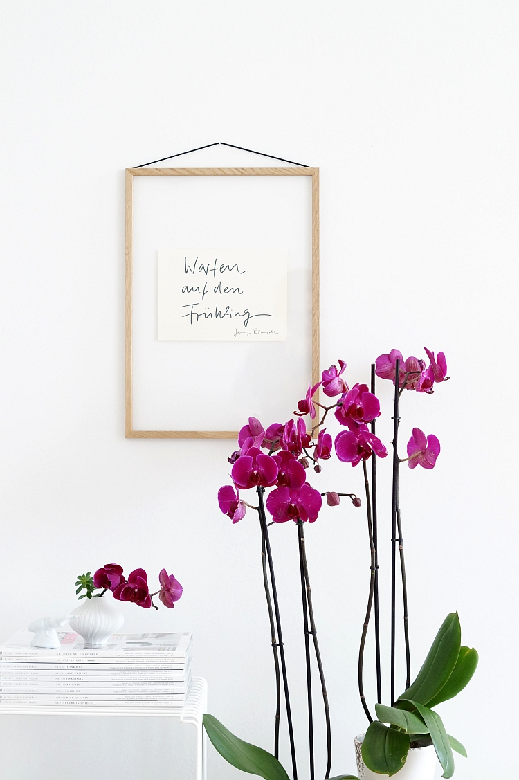 Phalaenopsis deep purple | photography: Sabine Wittig