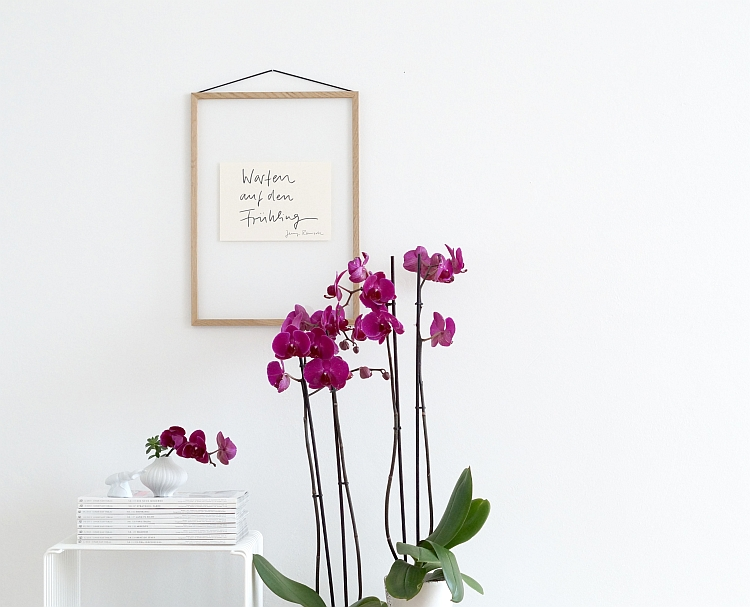 Phalaenopsis deep purple   photography: Sabine Wittig