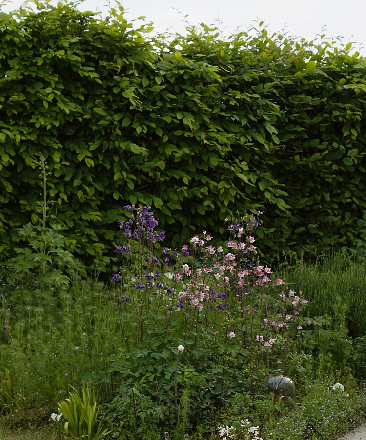 Garten im Mai 2016