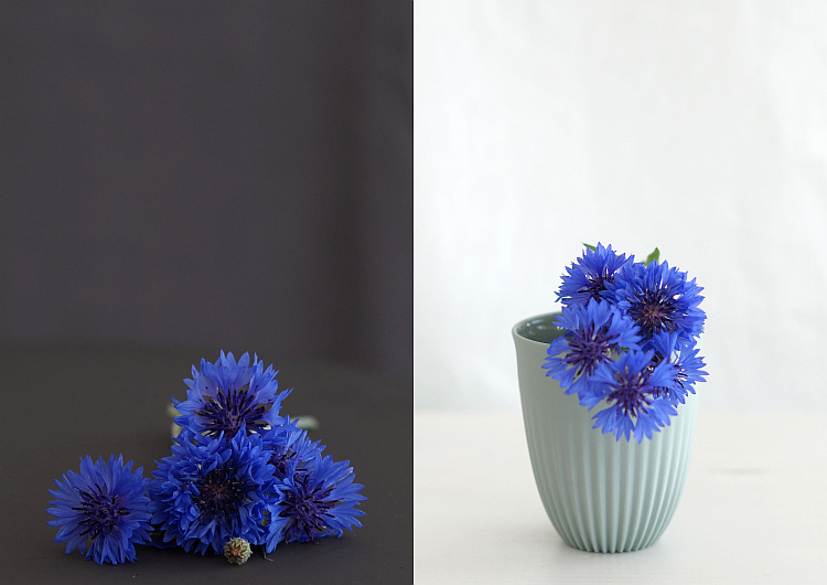 Kornblumen | Fotos: Sabine Wittig