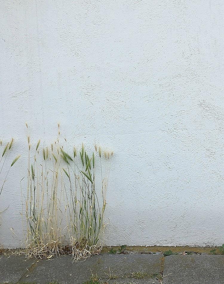 Gräser im Asphalt | Foto: Sabine Wittig