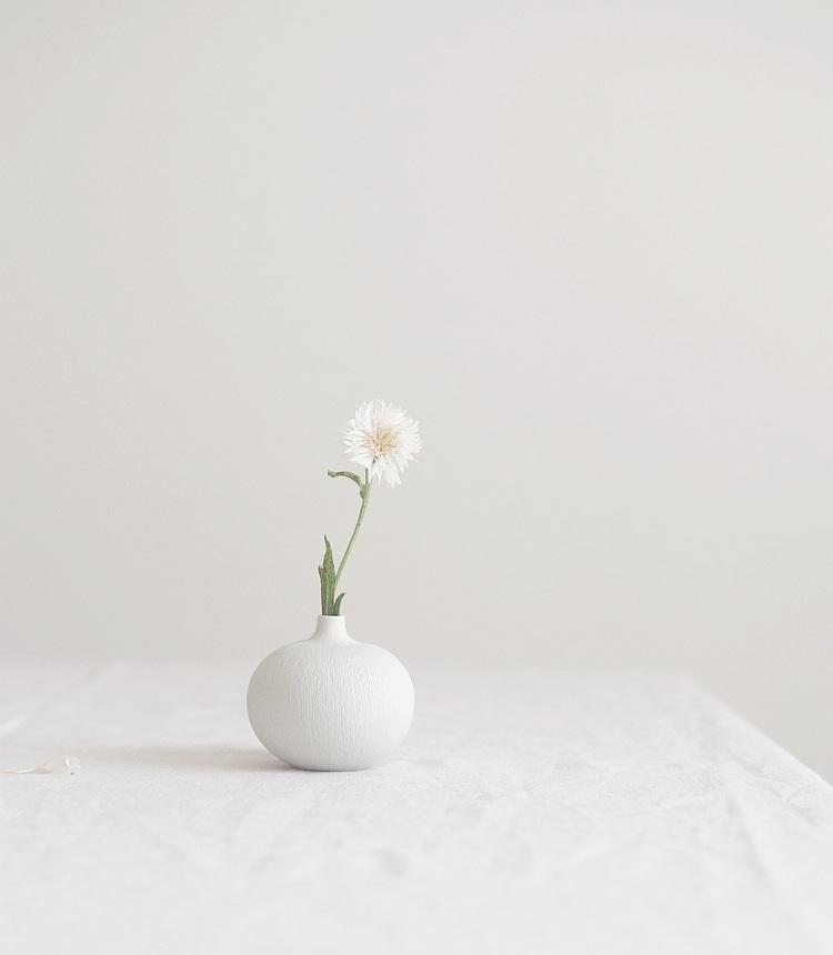 weiße Kornblume | Foto: Sabine Wittig