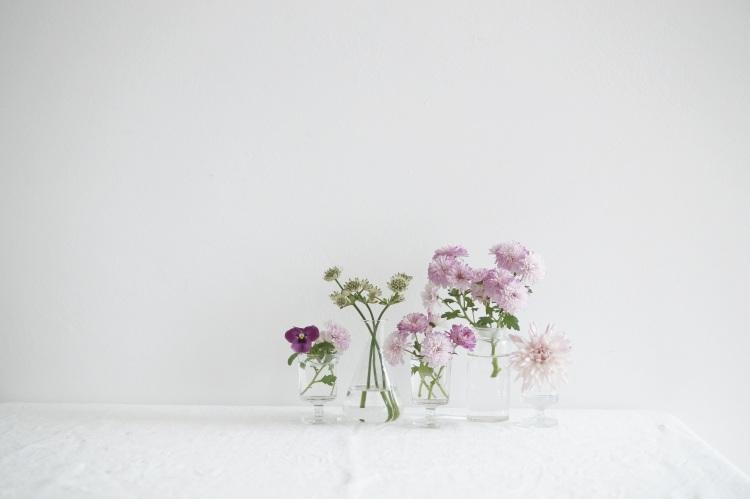 Rosa Herbstblüten | Fotos: Sabine Wittig