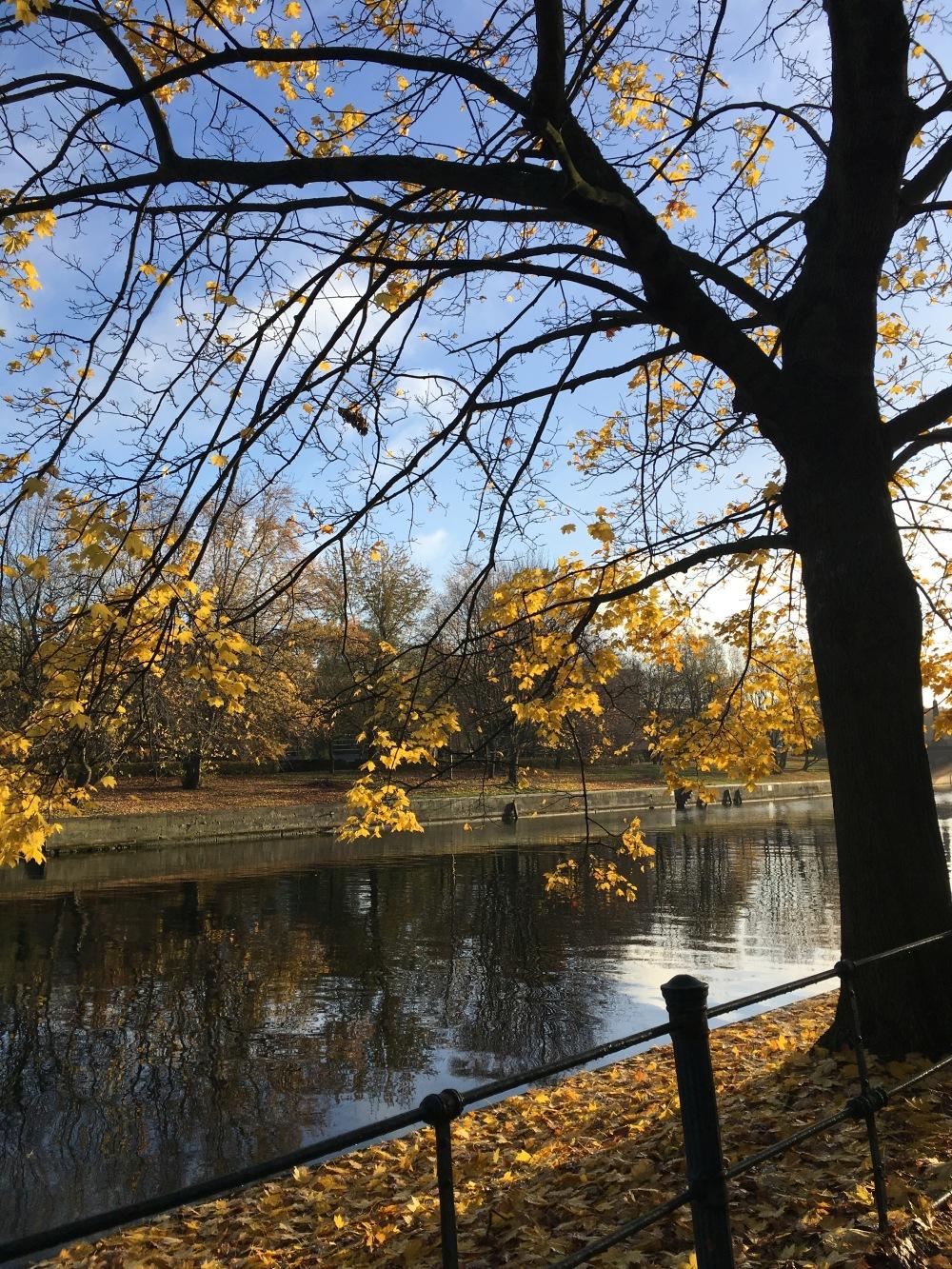 An der Spree im Herbst 2017 | Foto: Sabine Wittig