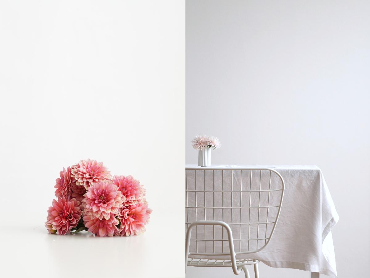 Dahlien und Chrysanthemen | Fotos: Sabine Wittig, azurweiss