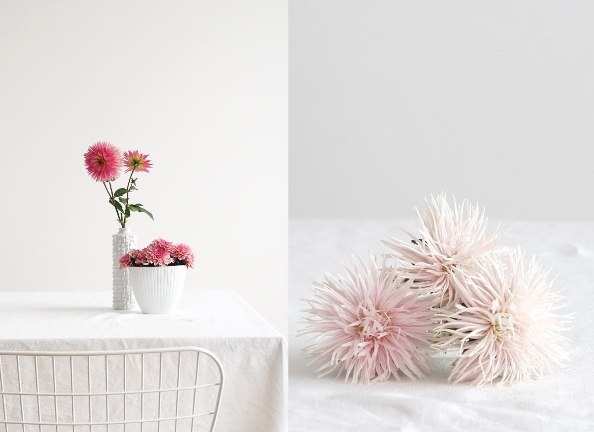 Dahlien und Chrysanthemen | Fotos: Sabine Wittig | www.azurweiss.de