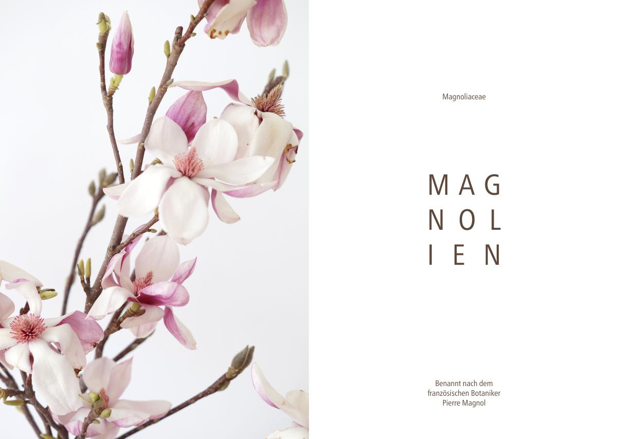 Magnolien | Foto: Sabine Wittig