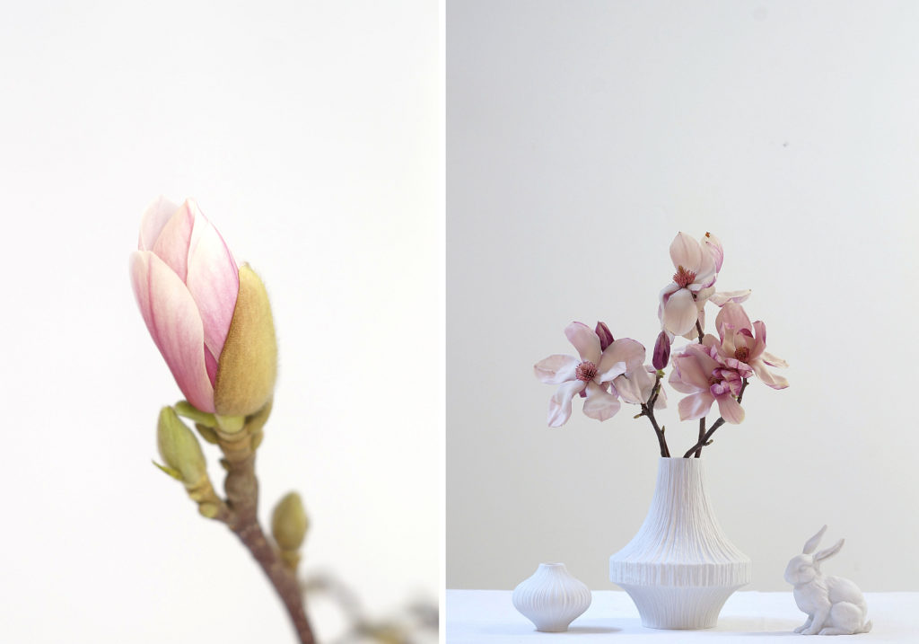 Magnolien | Fotos: Sabine Wittig