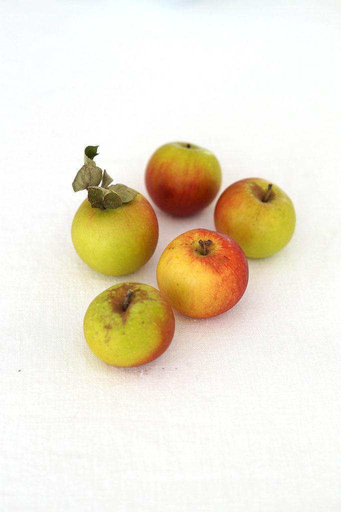 Äpfel aus Nachbars Garten